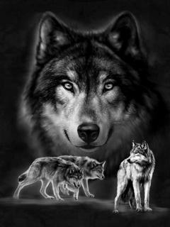 Картинка Серые волки