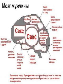 Картинка Мозг мужчины