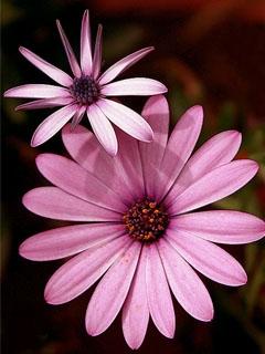 Картинка Pink Flower