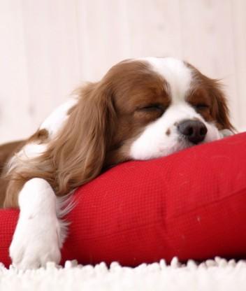 Картинка Собаки