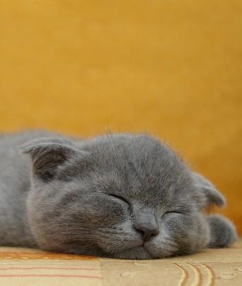 Картинка Коты