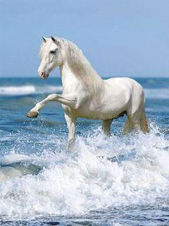 Картинка Белая лошадь