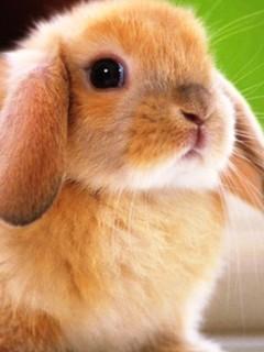 Картинка Очаровательный кролик