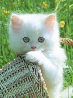 Картинка Котя