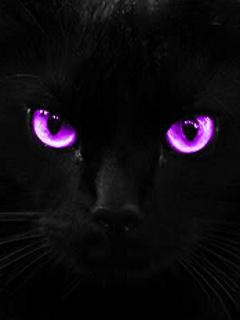 Картинка Глаза кошки