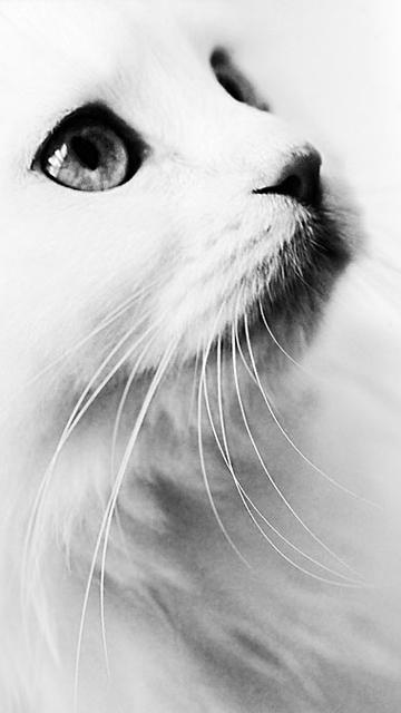 Картинка Animal