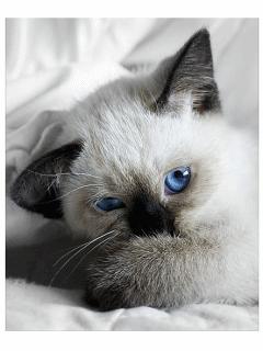 Картинка Любимый котёнок