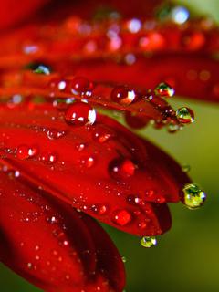 Картинка Natural Drops