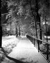 Картинка Зимняя аллея
