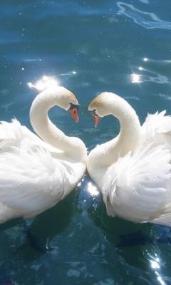 Картинка Лебеди