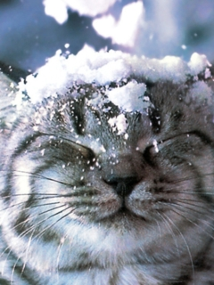 Картинка Cat in Snow