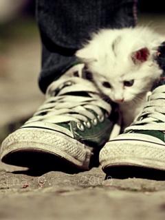 Картинка Kitten